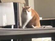 Kitty Isn't Liking The Pokemon Battle Music