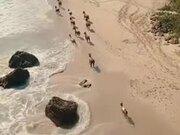 The Beautiful Scenery Of Horses Running