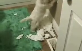 Oh, So That's Where All The Toilet Paper Went