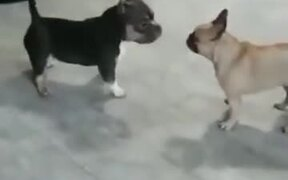 Two Doggos Go For A Dance Off!