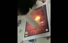 Catto Is The Master Of Fruit Ninja