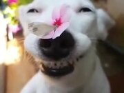 Cute Doggo Lets A Butterfly Stay On Its Nose