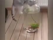 Looks Like Curiosity Does Kill Cats