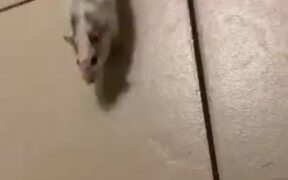Little Pet Mouse Does A Hippity Hoppity!