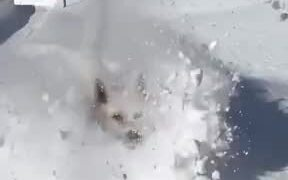 Doggo Really Loves Playing Around In The Snow