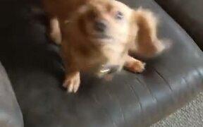 Little Cute Doggo Jumps On The Sofa