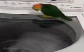 Birdie Intrigued By Washing Machine