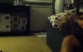 Little Puppy Jumps Off Couch