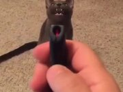 Here's A Cat Complaining About The Laser Pointer