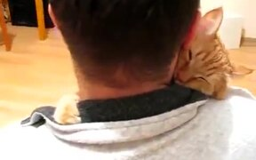 Cat In Need Of Some Affection