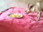 Doggo Not Ready To Share Food