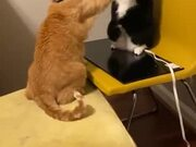 Cats Fighting Literally Like Humans