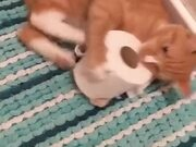 Cats And Their Unending Desire