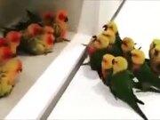 A Gang War, But Among Birdies!