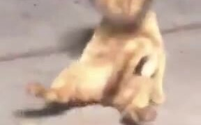 Catto Can't Do The One Thing It Loves The Most