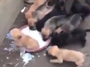 It's Food Fight For The Little Puppers!