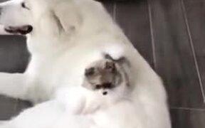 Big Doggo With Small Doggo