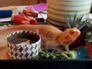 Keep A Reptile