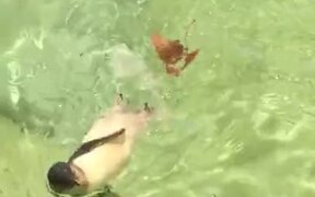 Penguin's Really Enjoying It's Swim!