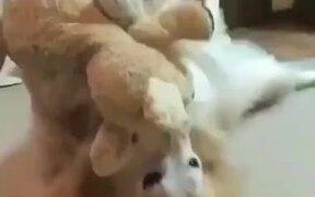 Doggo Absolutely Loves It's Plushie!