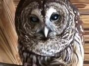 This Owl Calling Sounds Like It's Talking!