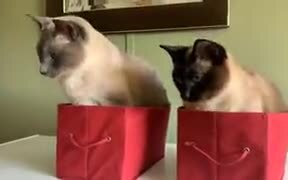 Are These Cats Getting Hypnotized?