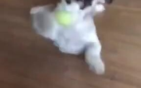 Cute Pupper Very Happy To Play With Ball