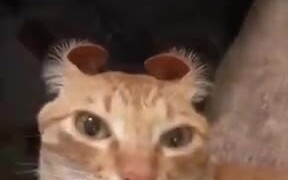 Wait, What Just Happened To Catto's Ears?