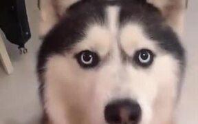 Playing With Doggo Be Like