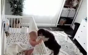 Dogs Can Be The Best Babysitters!