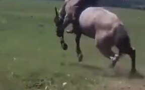 Guy Does A Full 360° On Rowdy Horse!