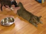 Catto Is In An Unwanted Game Of Tug Of War