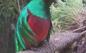 Mexico's Bird Quetzal Looks Absolutely Stunning