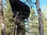 Most Civil Interaction Between A Bear And A Human