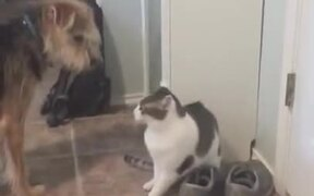 Doggo Just Wants To Be With Catto!