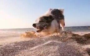 It's Doggo Vs Crab!