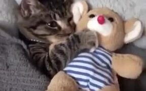 Cat Needs To Be Tucked In And Get A Teddy