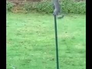 Squirrel Tries To Climb Slippery Pole