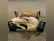 The Most Intense Wrestling Match Ever!