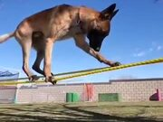This Is The Doggo Of Balance!