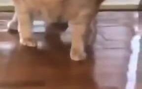 What A Fat Cat!