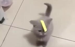 Stop Recording And Help The Poor Kitten!