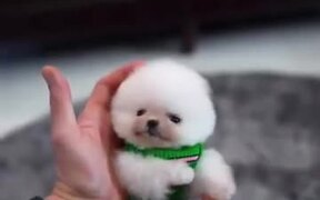 Cutest Ball Of Happiness Ever!