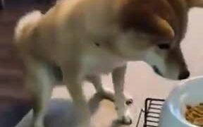 Dog Just Can't Wait To Eat!
