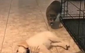 Cat Sniffs Puppy's, Doesn't Like What It Smells