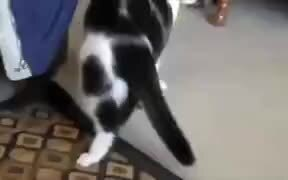 Catto Does A Cool Roll!