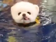 Small Puppy's Trying Out Some Swimming!