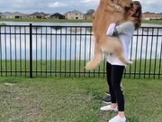 Cutest Synchronized Doggo Jump!