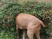 Doggo Getting A Full Body Scratch!