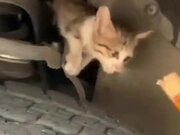 Kitten Inside A Car's Engine Bay Gets Lured Out